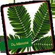 Meine Mimose